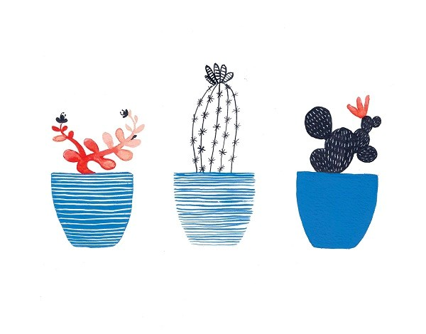 Various cactuses in blue flower pots